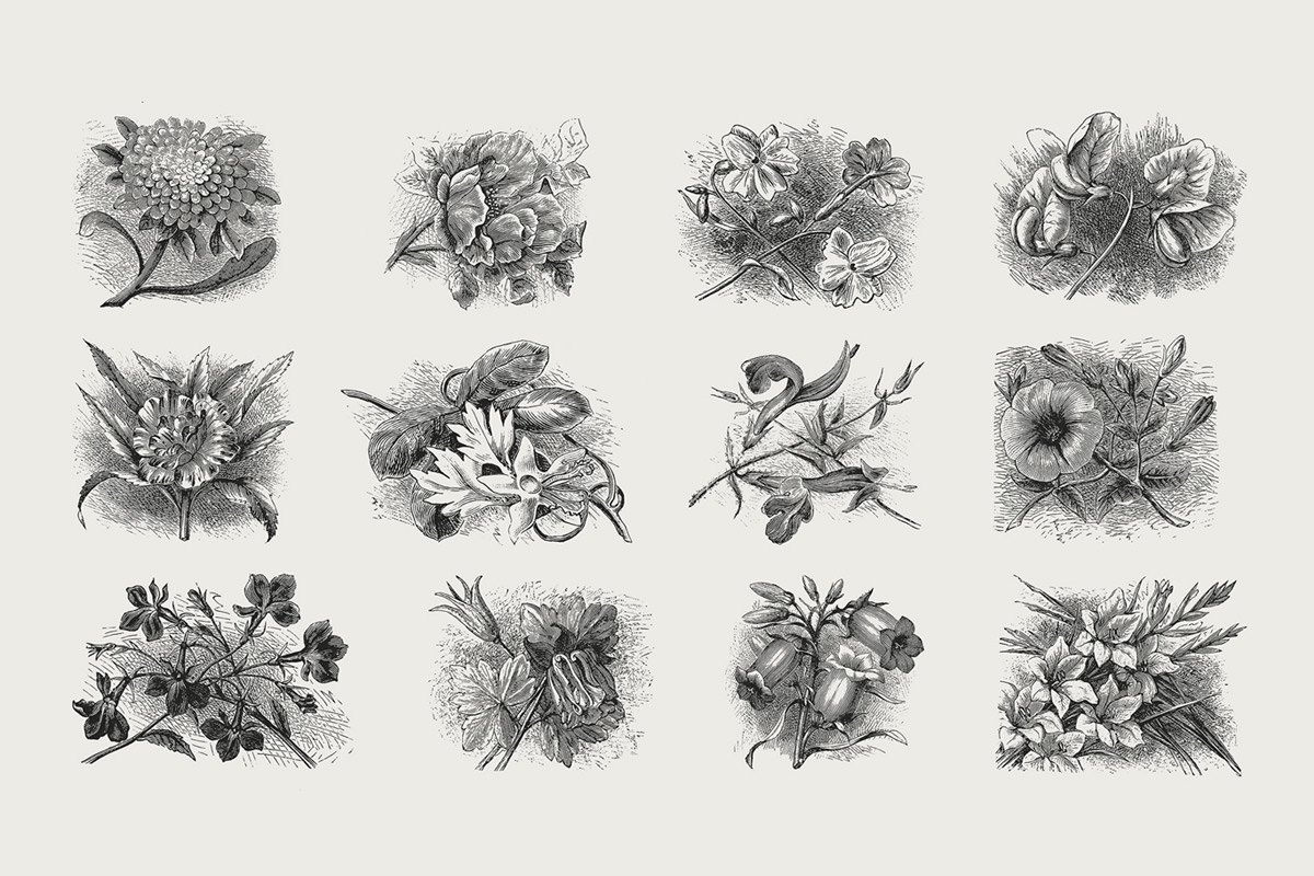 35 Plant Flower Illustrations Vol2 Vector Png Formats Tom