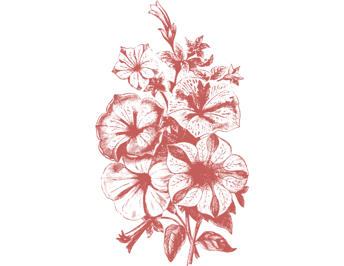 Flower Vector Png Image Purepng: 36 Plant & Flower Illustrations Vol.1 (Vector, PNG And