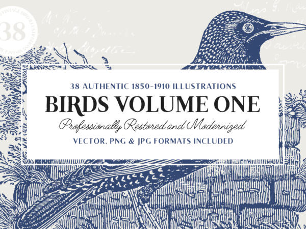 vector-birds-collection-engraving