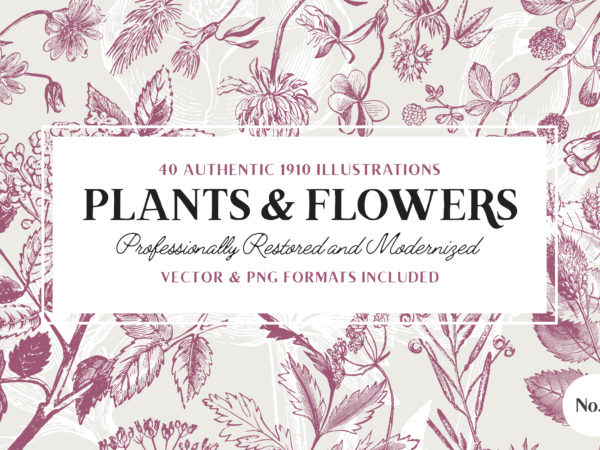 plant-and-flower-illustrations-vintage