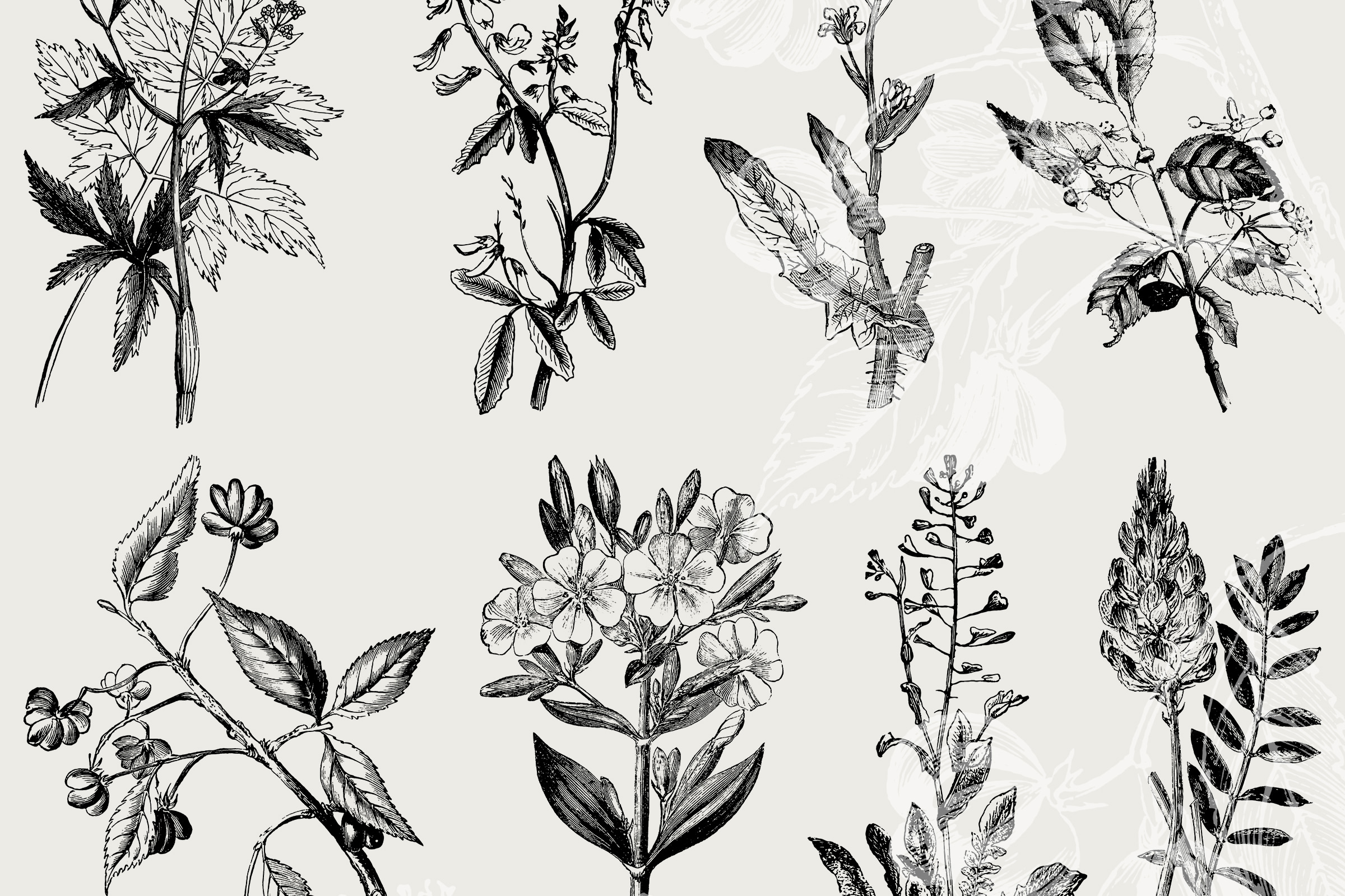 39 Plant Flower Illustrations Vol3 Vector And Png Tom Chalky